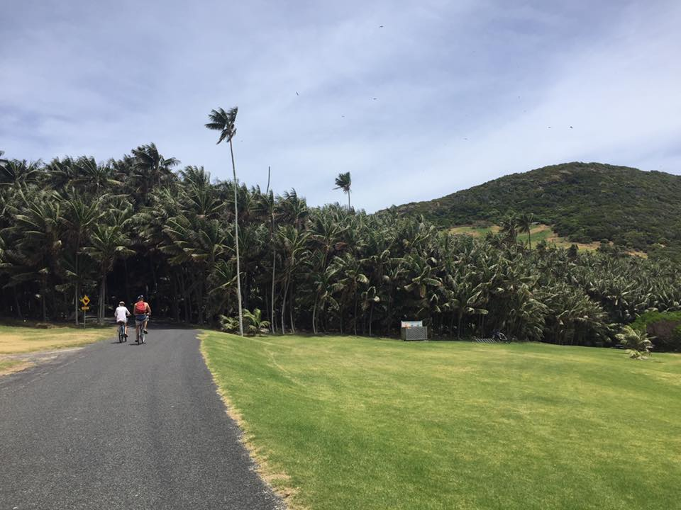 Kentia palms are native to Lord Howe Island