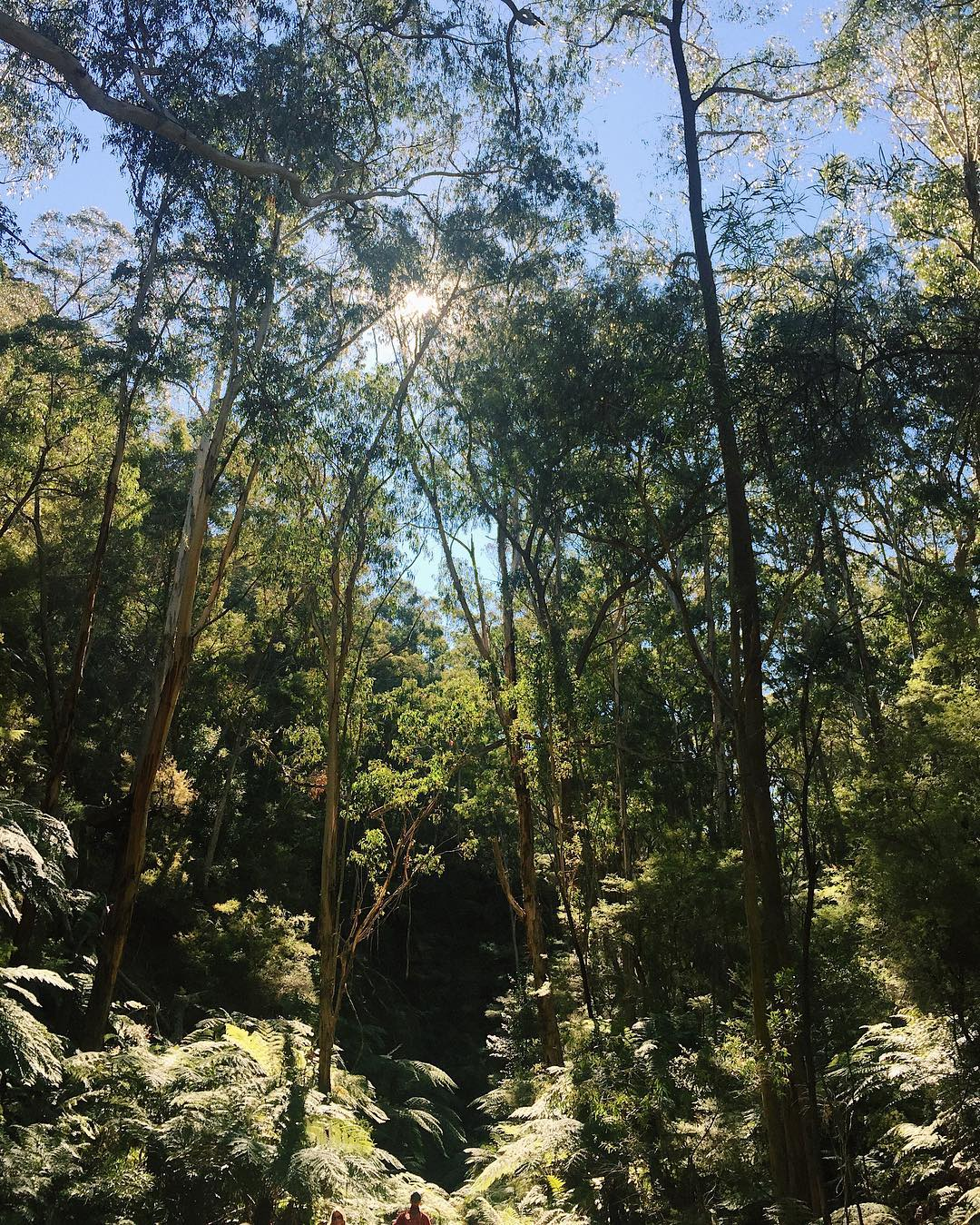 Glow Worm Tunnel, Lithgow