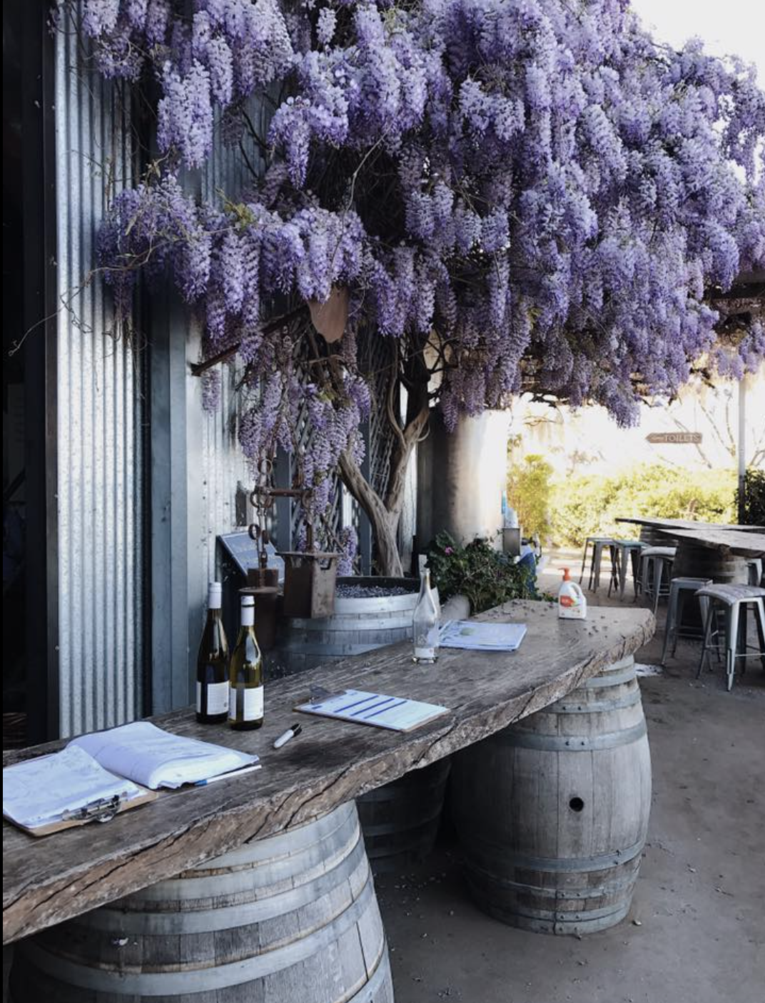 Wisteria-covered Lowes Vineyard, Mudgee