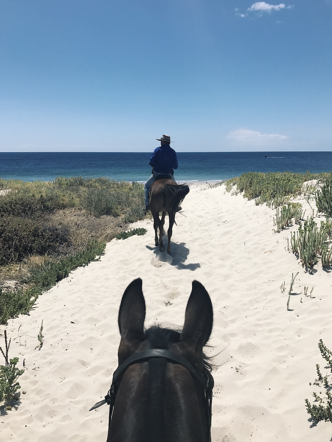 Riding at Forrest Beach with Jester's Flat Equestrian