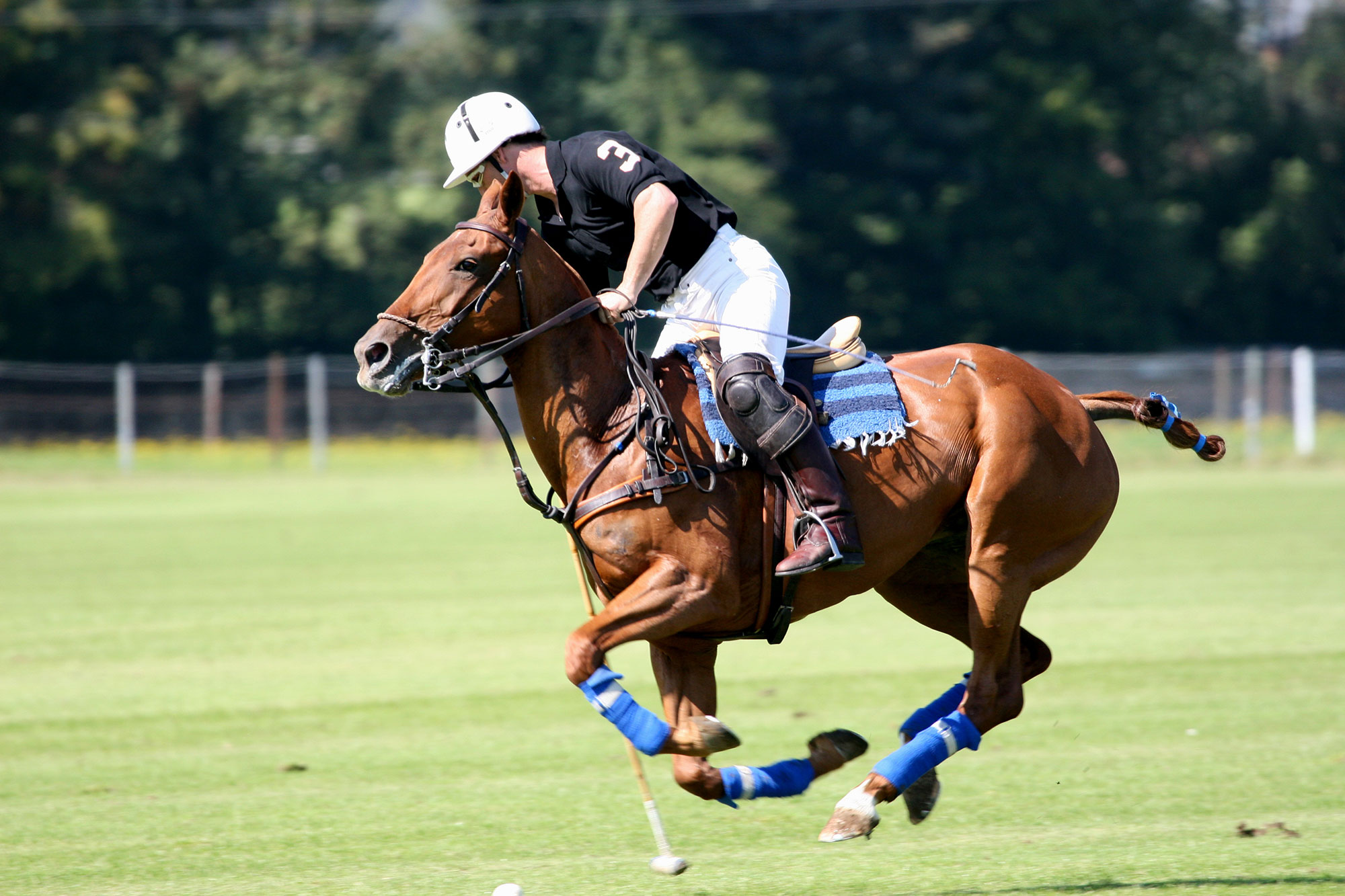 american-rv-motorhome-hire-equestrian-polo-events.jpg