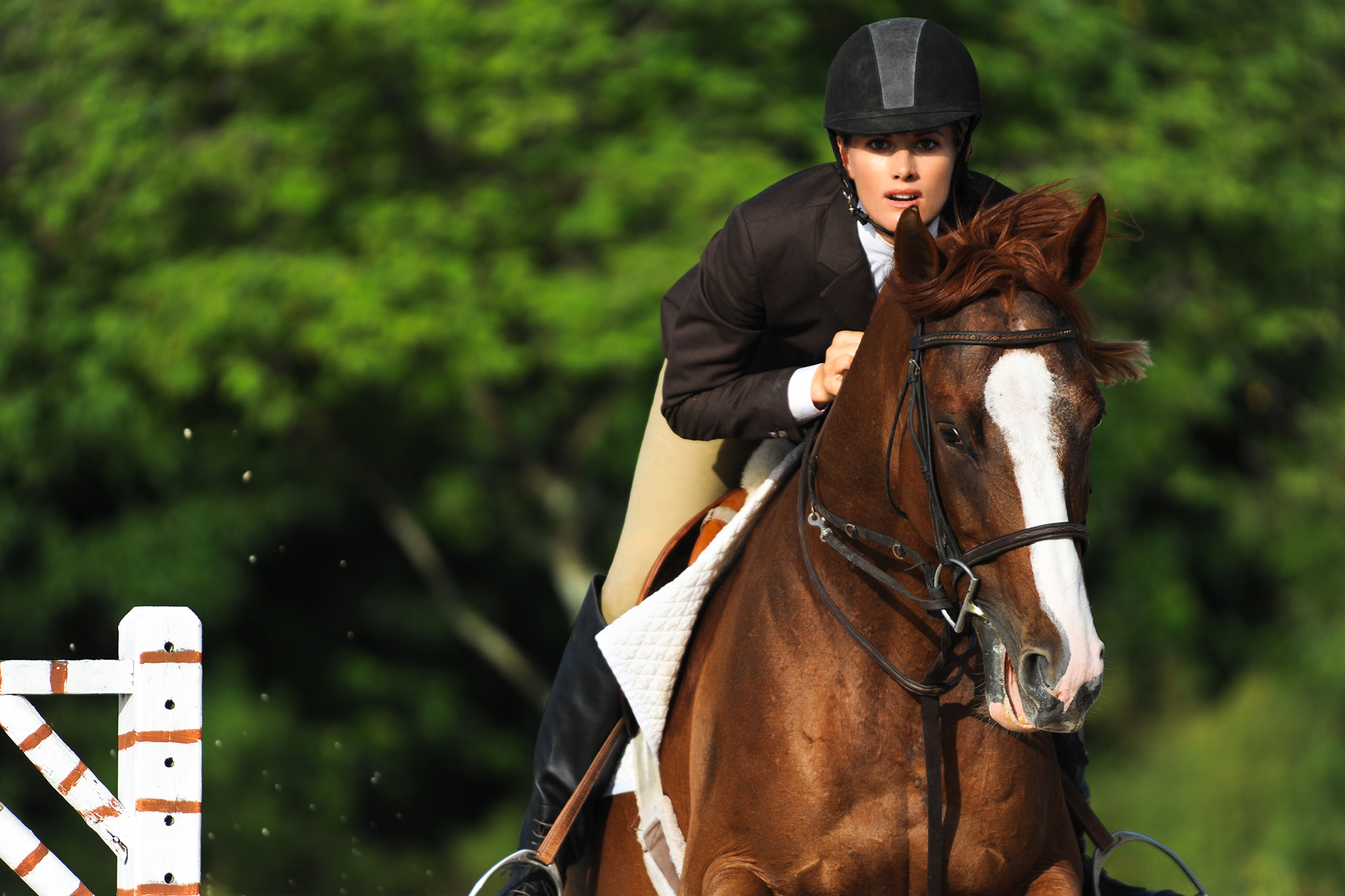 american-rv-hire-equestrian-events.jpg