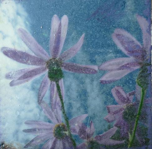 Peggy.09.purple flowers.jpg