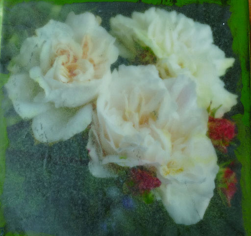 Peggy.10.roses.jpg