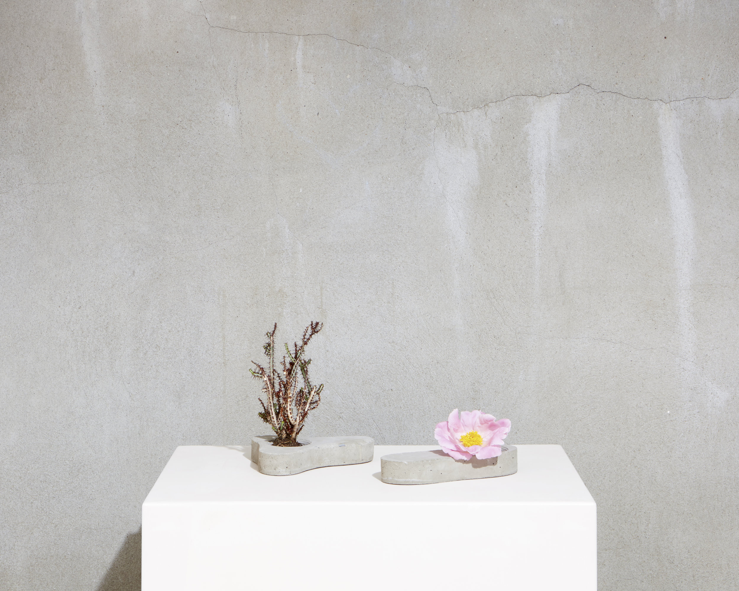 Reneuve Collection: Cement Planters