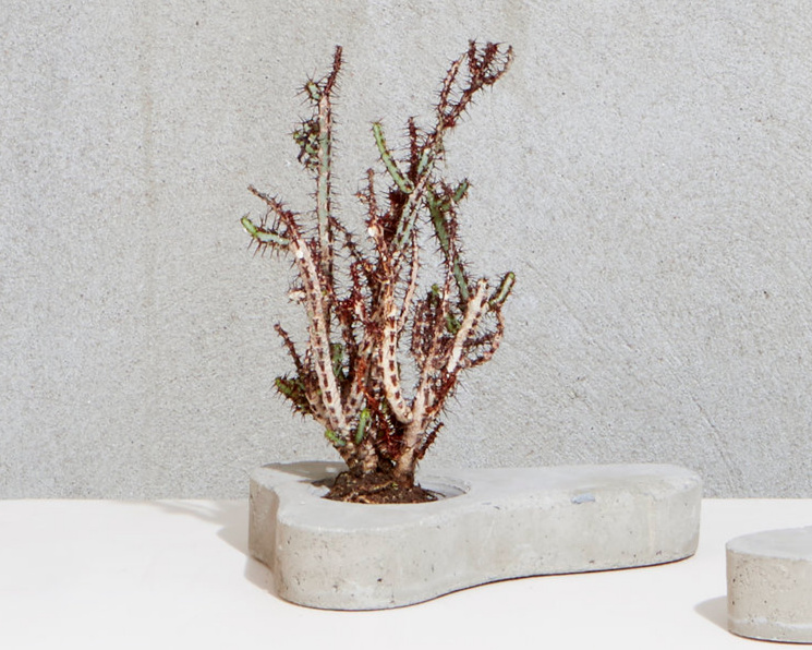 Nuovo-Collection-Cement-Planters
