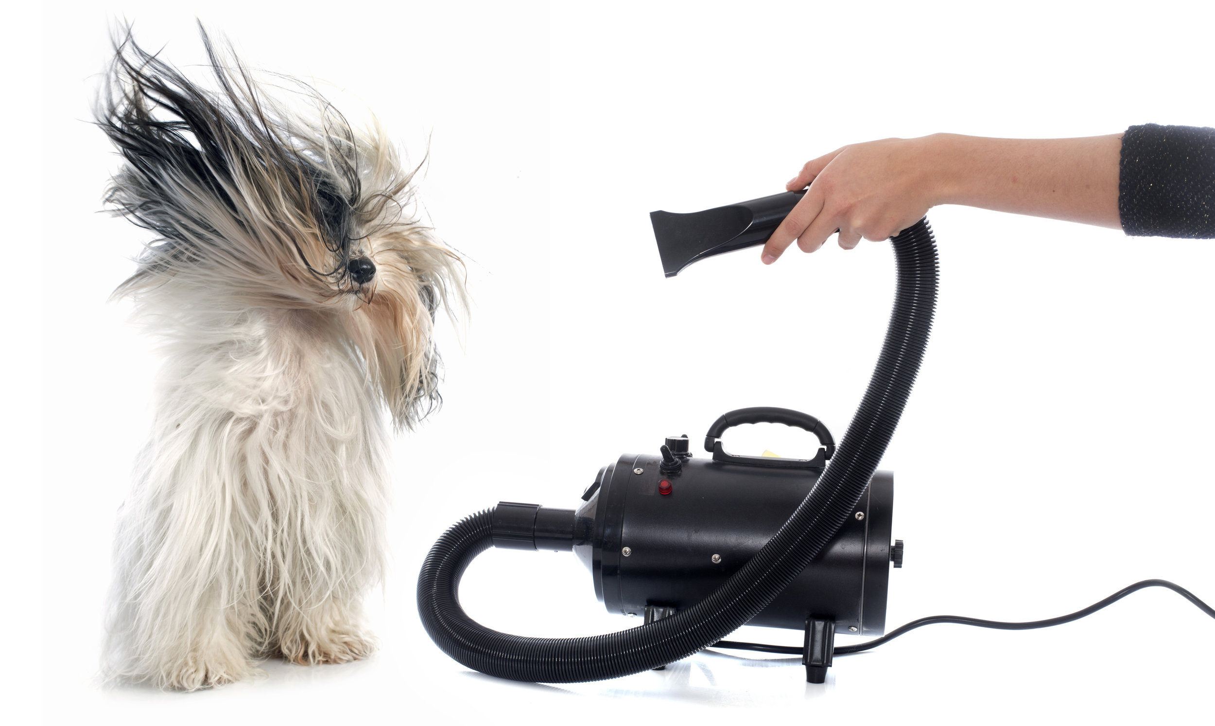 Dog blow dryer 2.jpg