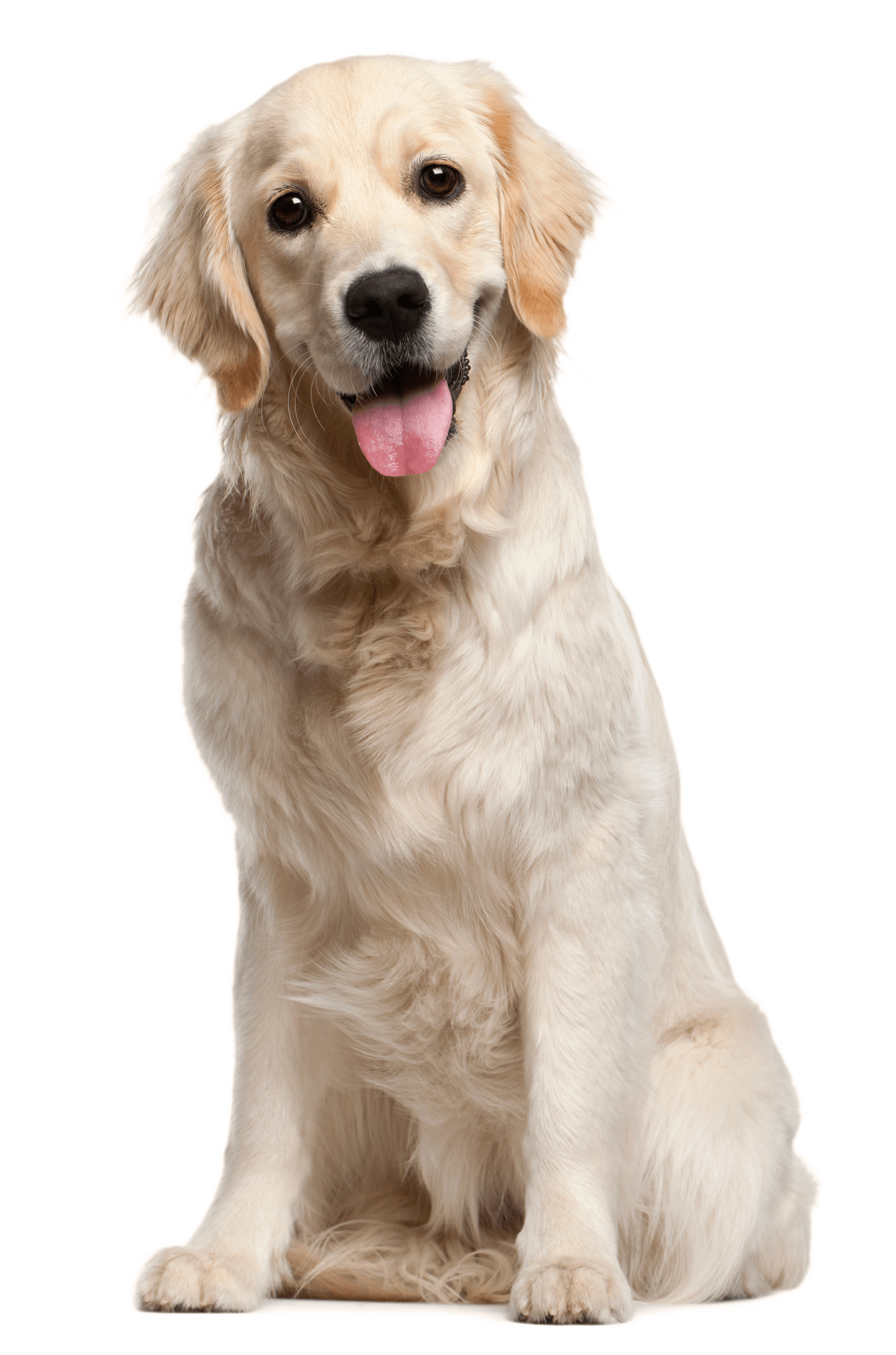 kisspng-dog-grooming-puppy-cat-pet-white-dog-5a70ac435552b0.5161753115173335713495.png