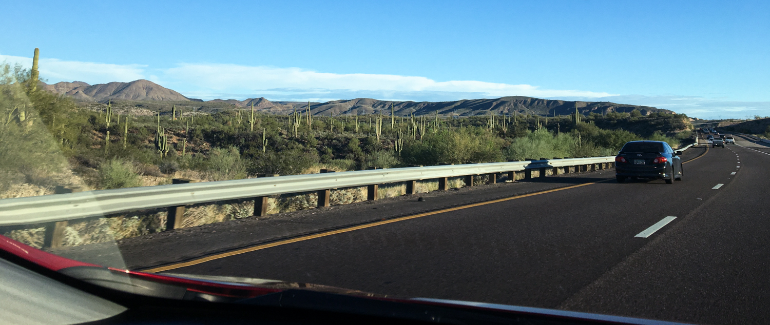 The highlight of the drive from Sedona to Scottsdale was seeing saguaro cacti for the first time!