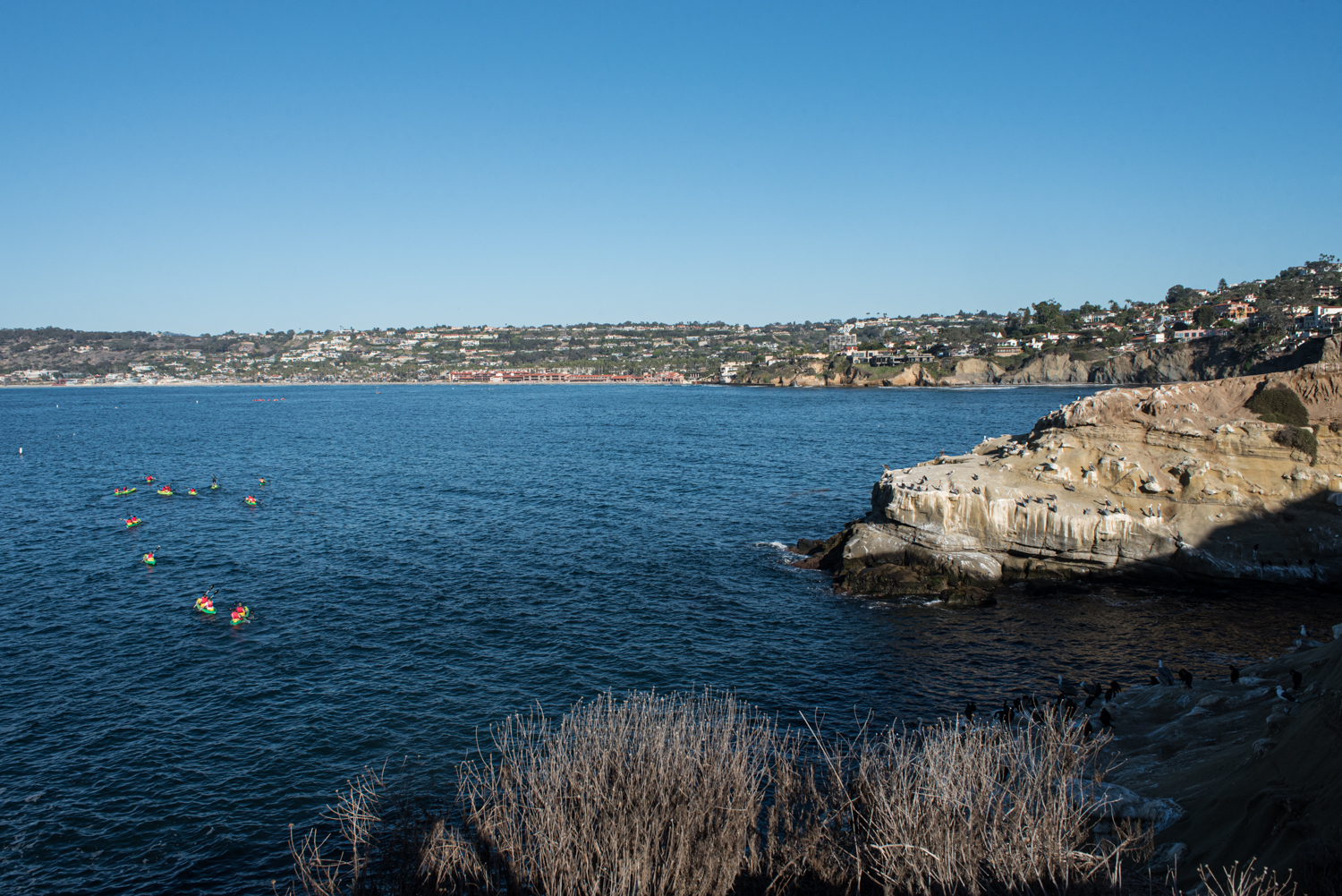 La Jolla Cove is a popular spot for swimming, snorkeling, kayaking and observing the sea lions and seals.