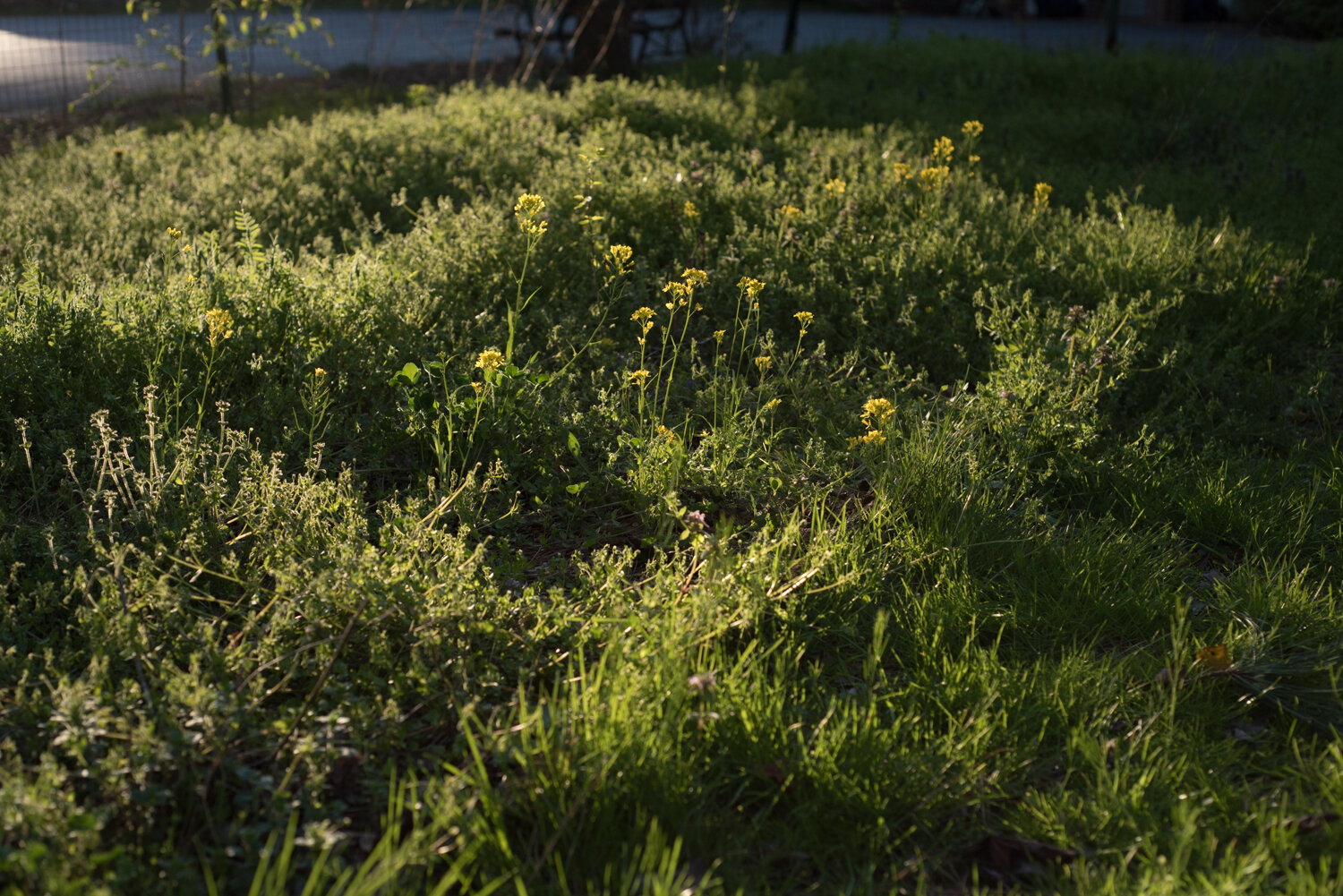 My garden space is often overcome by grass and weeds.