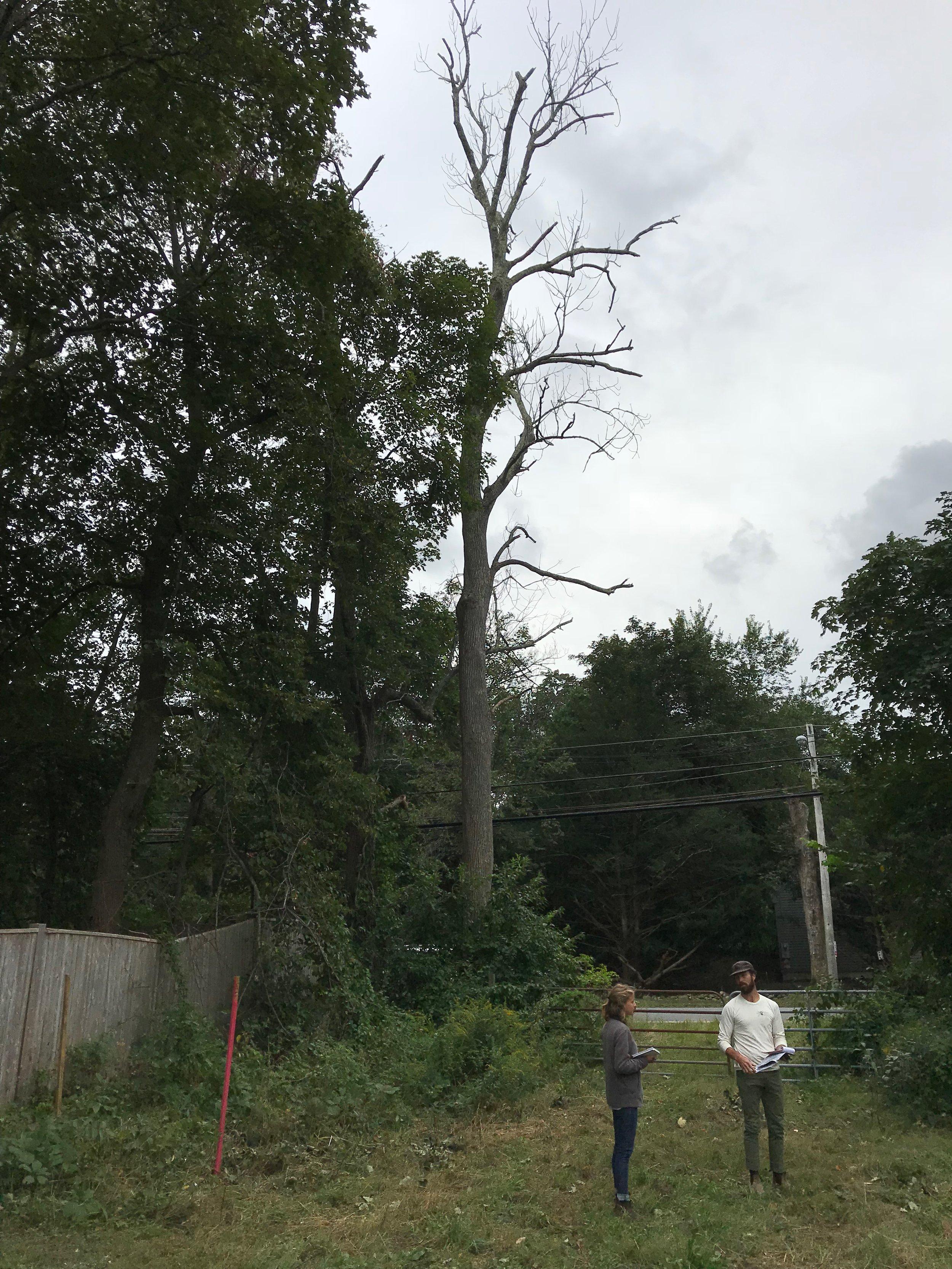 2018 Site Planning