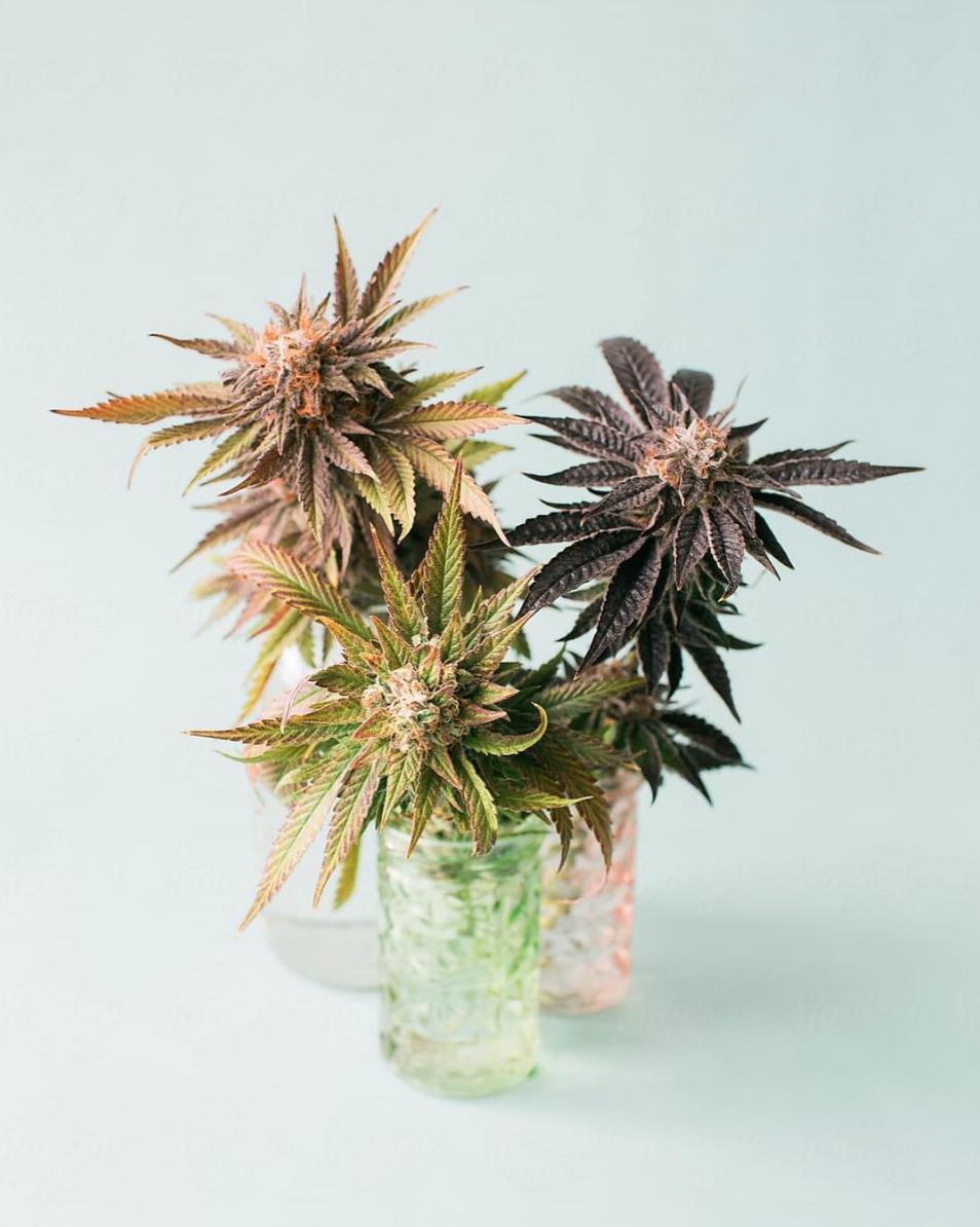 Photo: Momslovecannabis Instagram