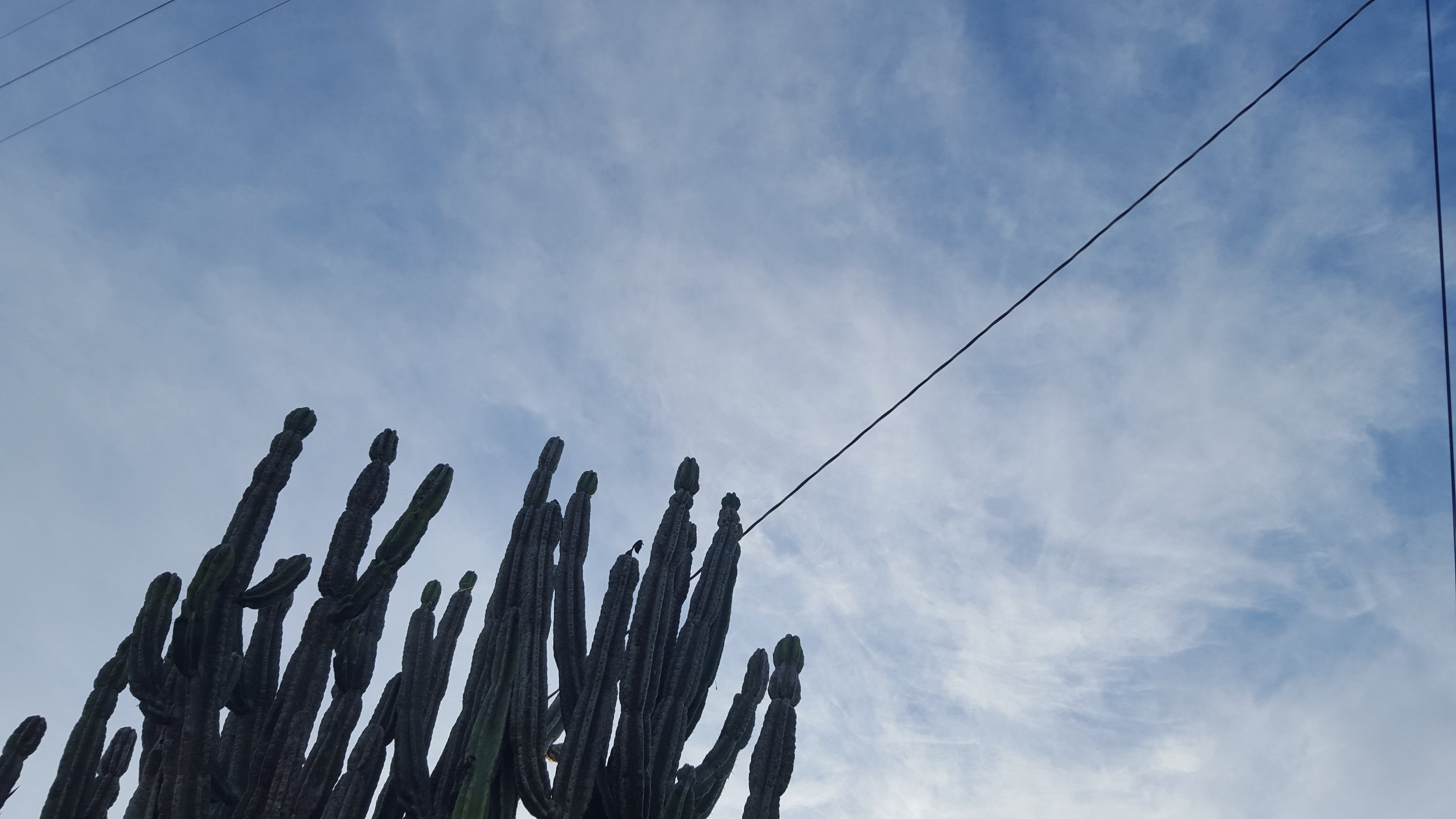 Image Description: The arms of a cacti reach for the sky. Wispy clouds over a light blue sky are in the background.