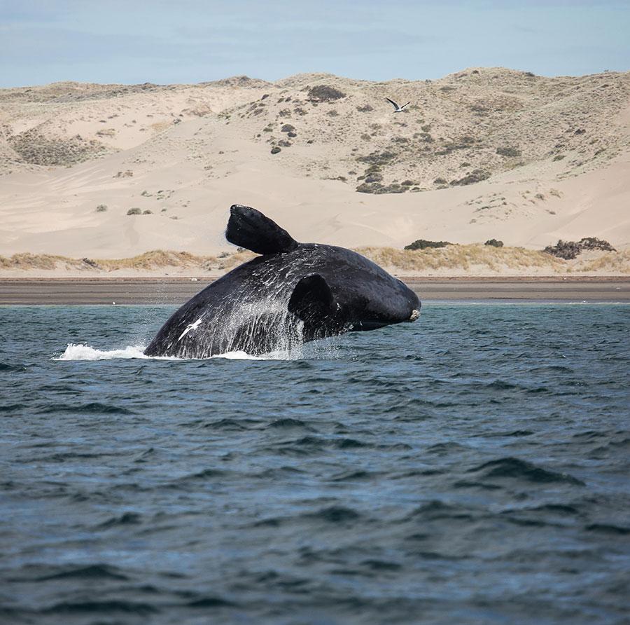 cory-whale.jpg