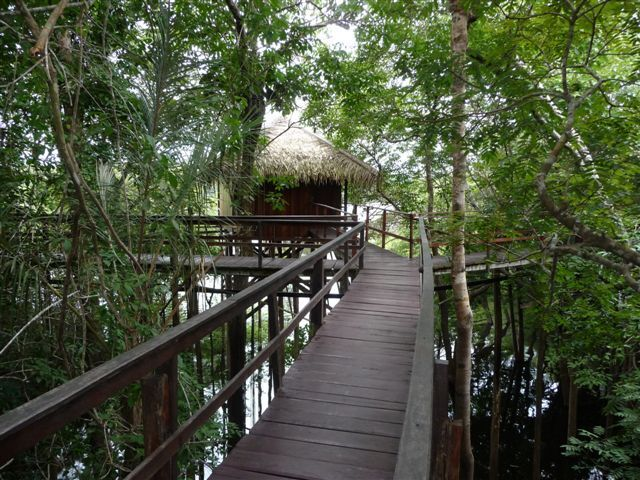 Brazil Amazonas Tour 9.jpg