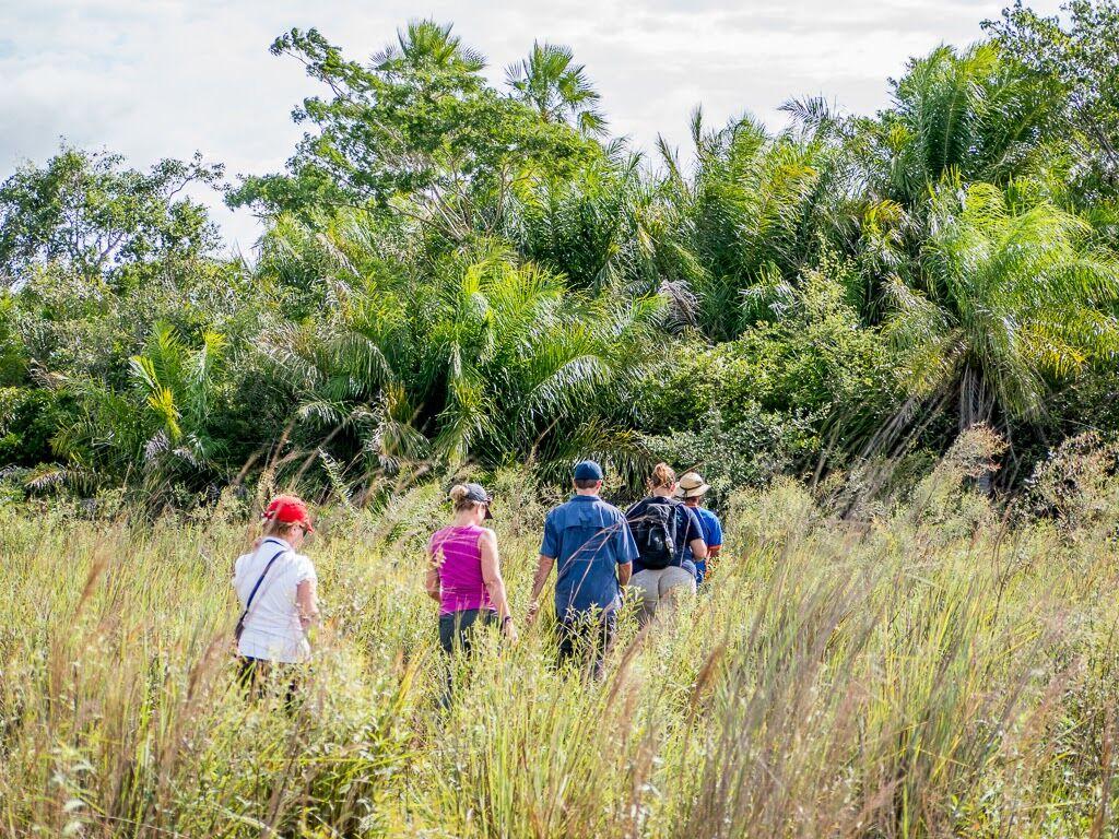 Brazil Pantanal North 6.jpg