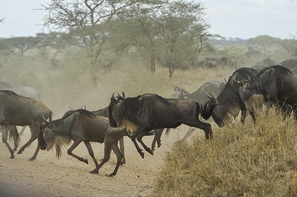 Tanzania Serengeti 9.jpg