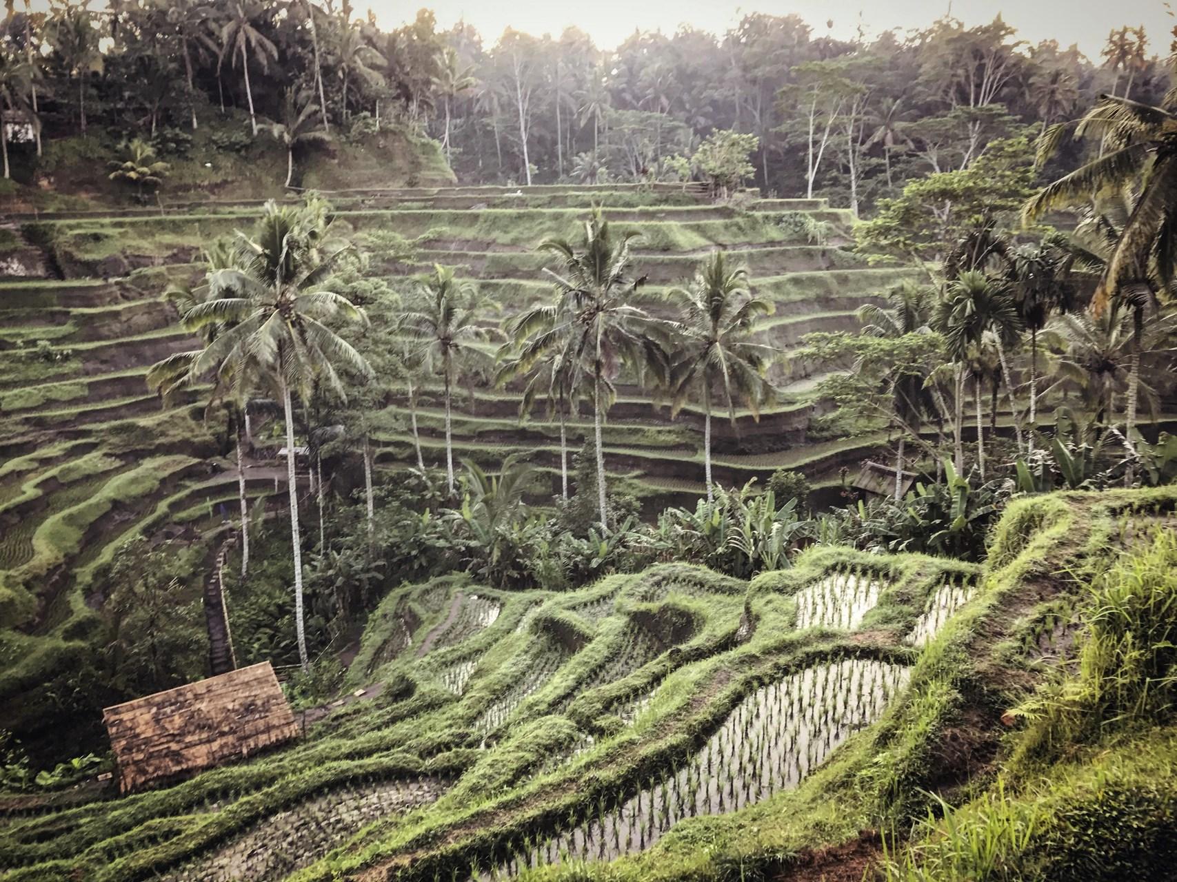 Bali Discover 4.jpg