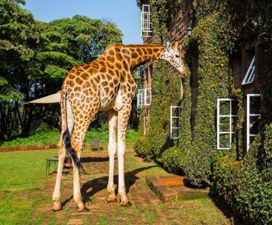 Karen Blixen og giraffsenteret