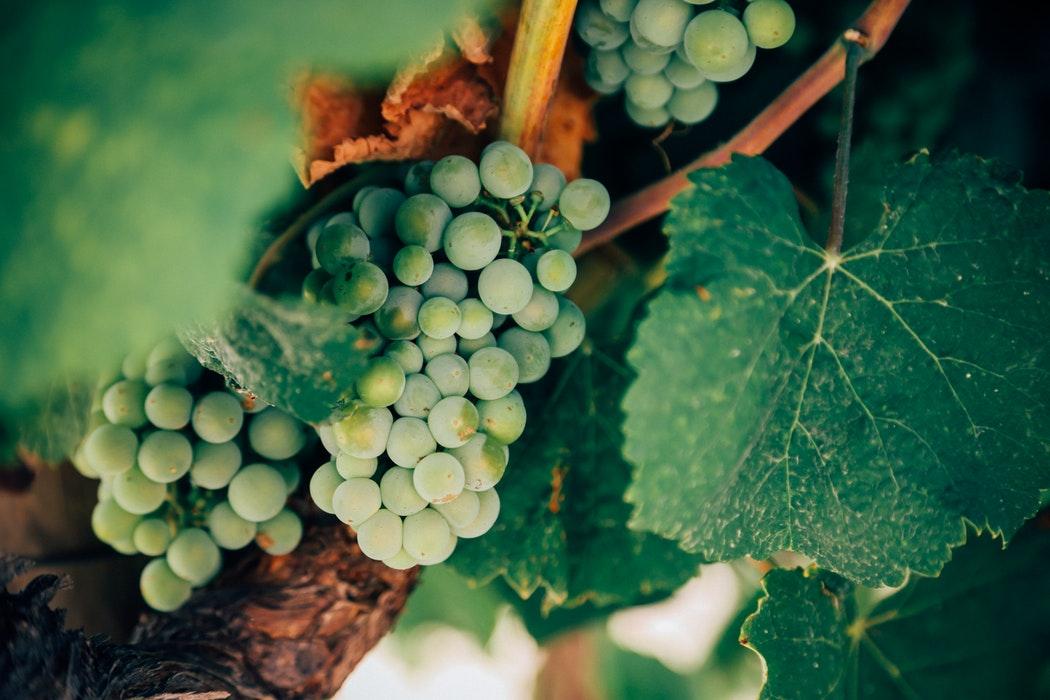 Smak vin i Colchagua Valley