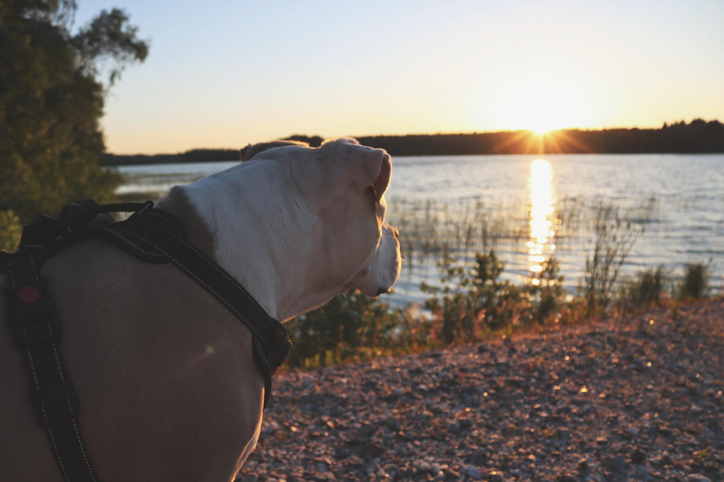 sunset_lake.jpg