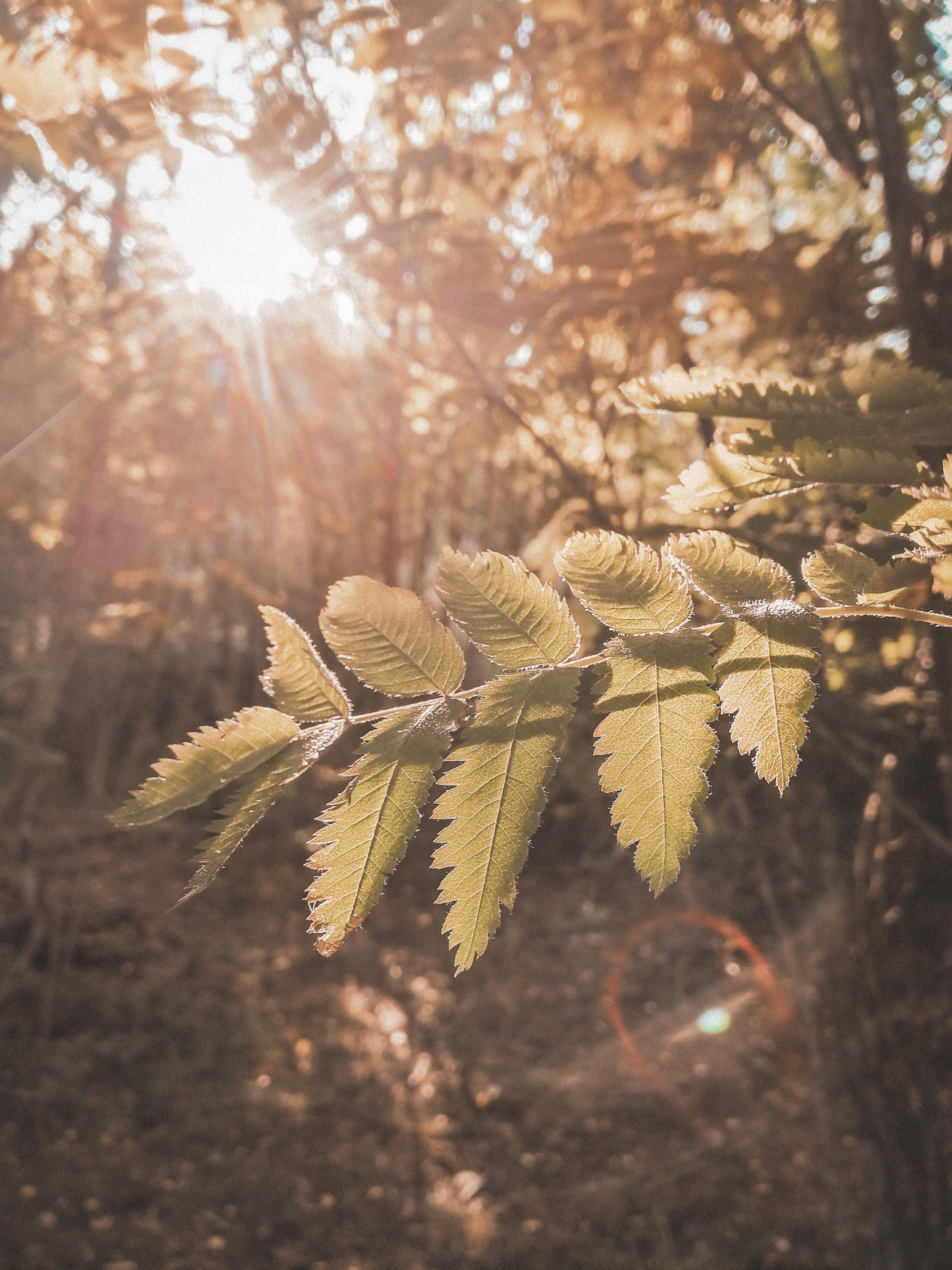 morning_light_.jpg