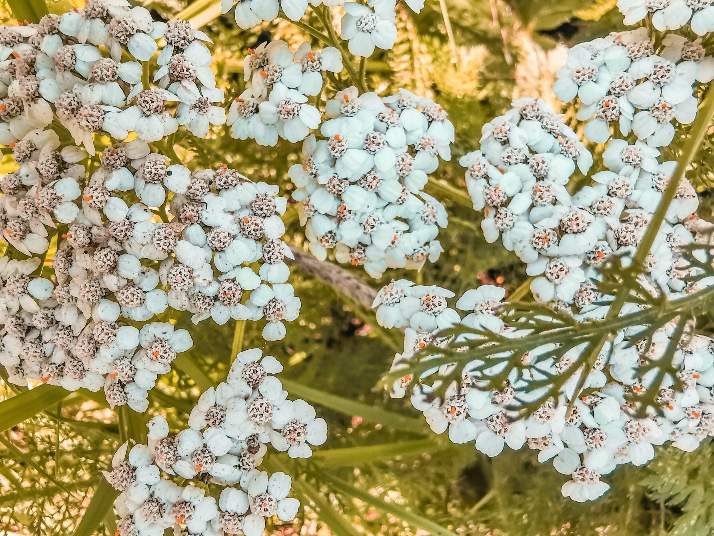 wild_herbs.jpg