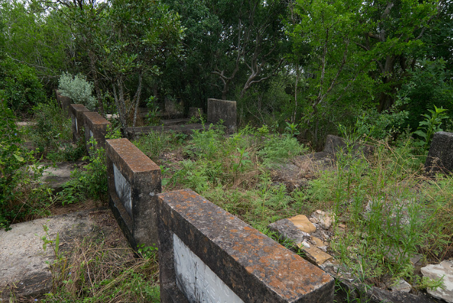 Rows of headstones being hidden by overgrown vegetation at Mitchell-Mauermann cemetery. Photo provided by Dr. Rodolfo Valdez.