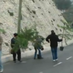 xmas trees jerusalem