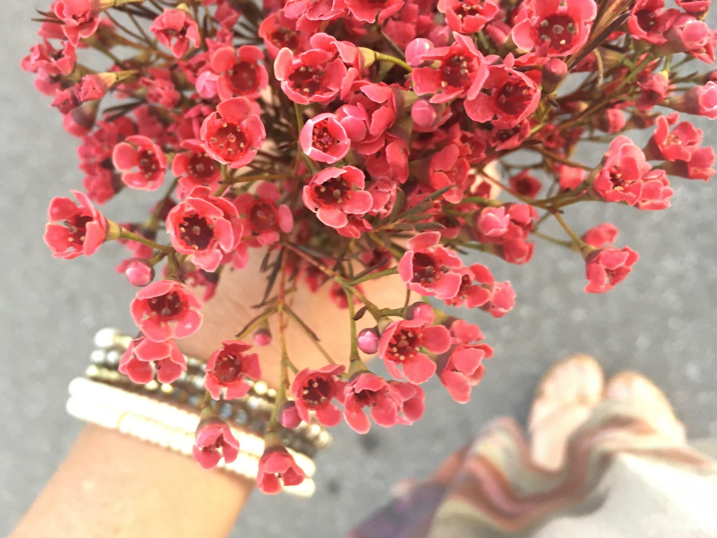waxflowerwonderful.jpg