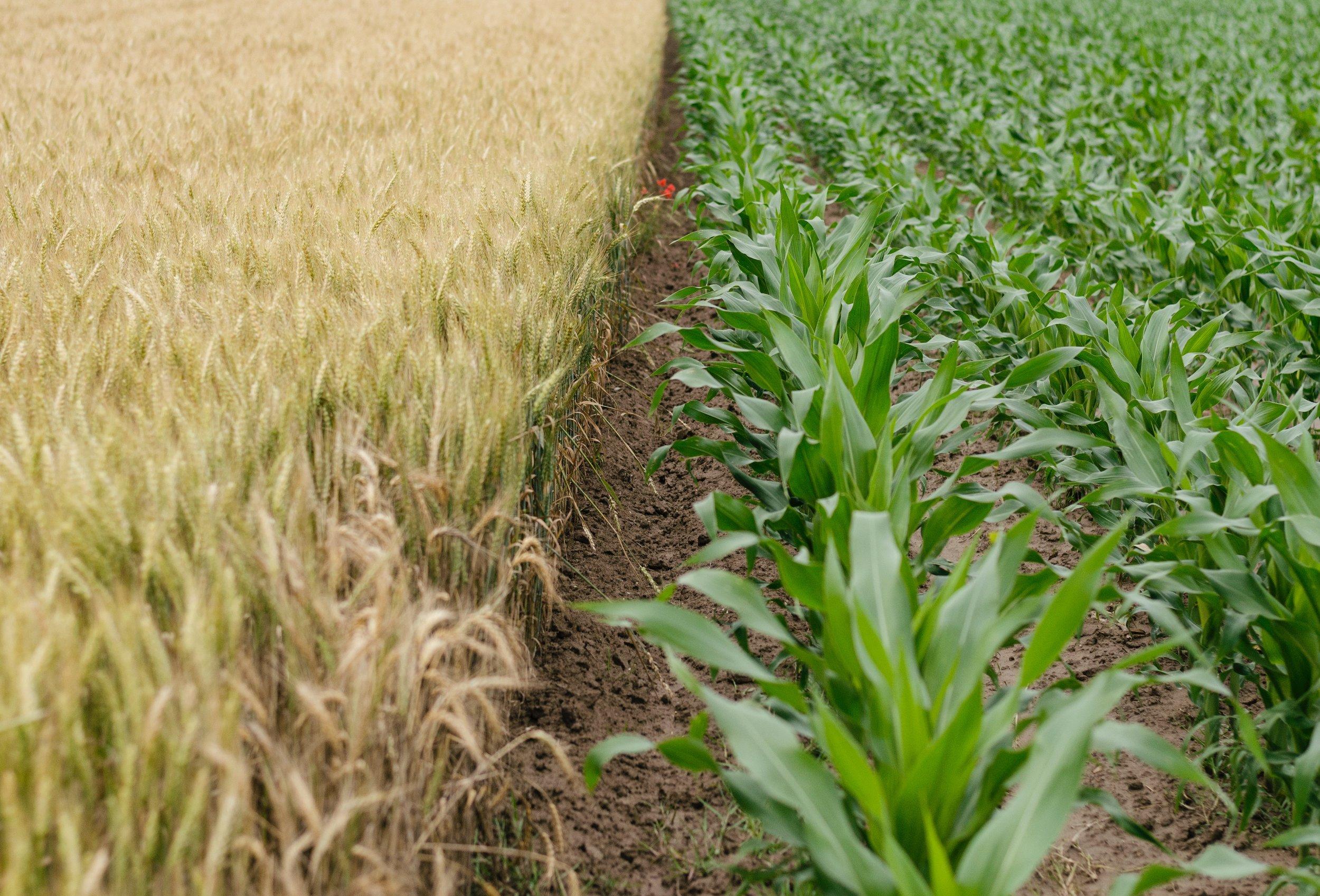 Brian Baldridge values agriculture jobs