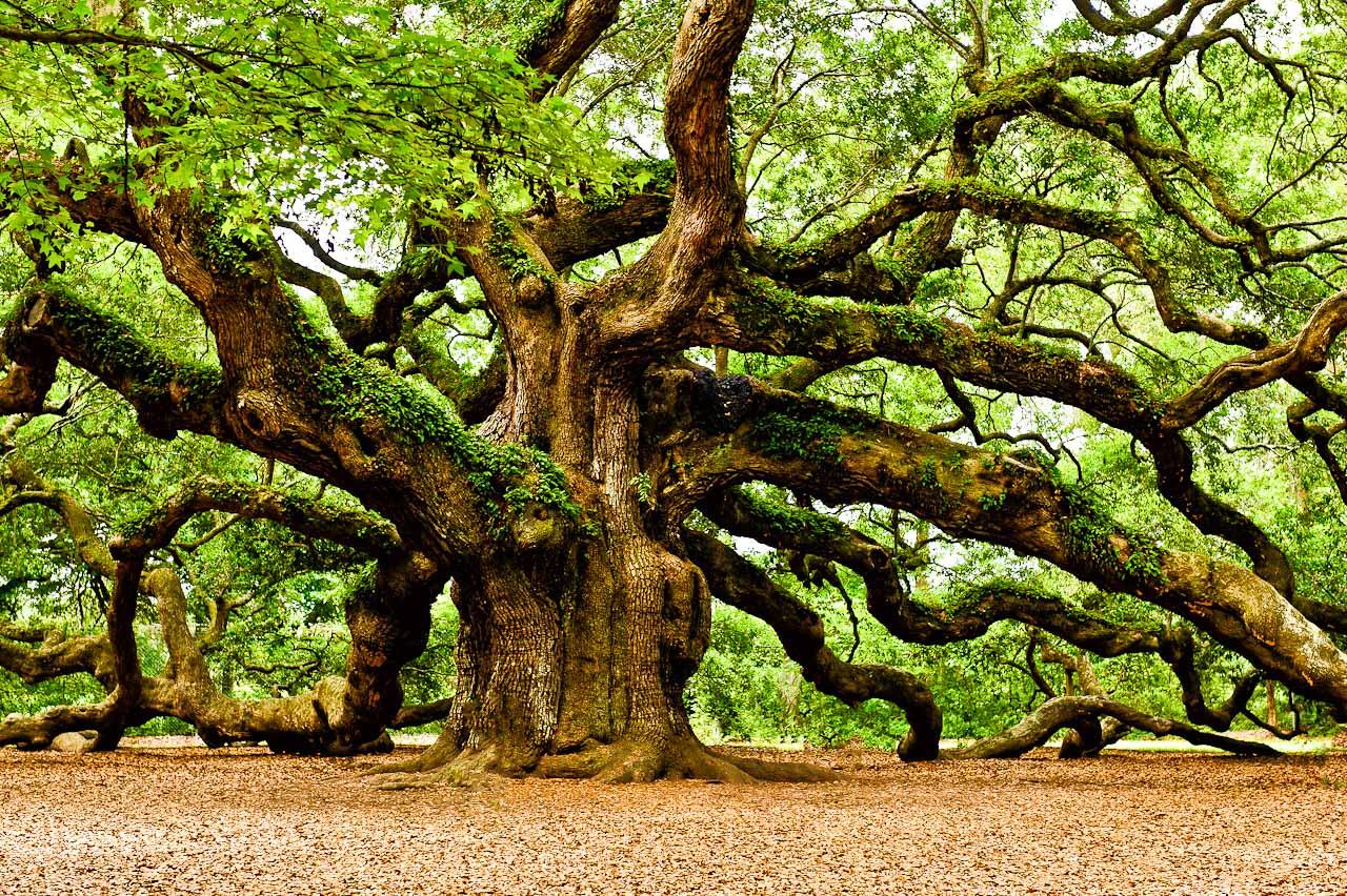 oak bark-1.jpg