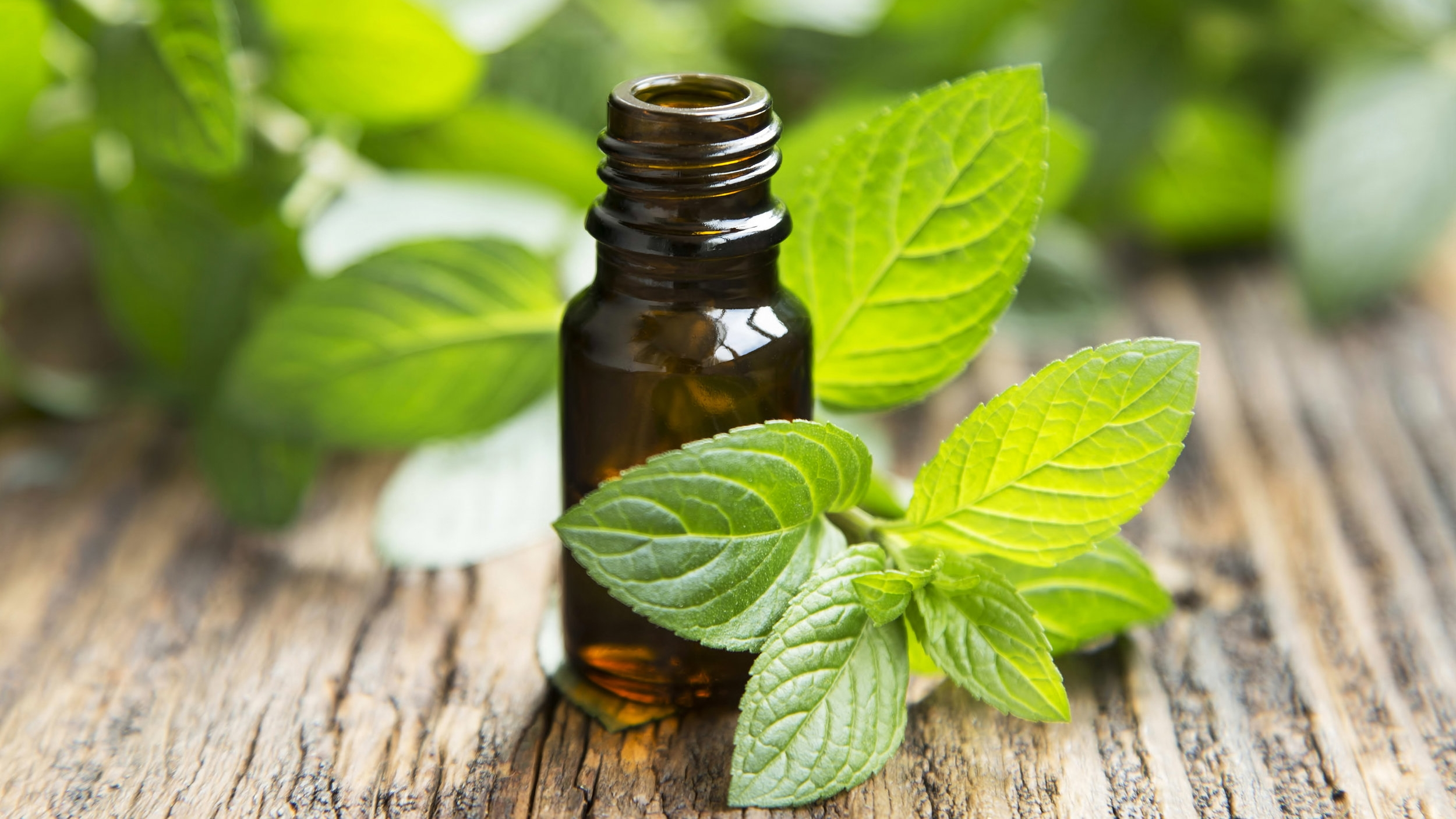 Peppermint Oil - Antimicrobial, freshens breath, opens the respiratory tract and has a calming effect.