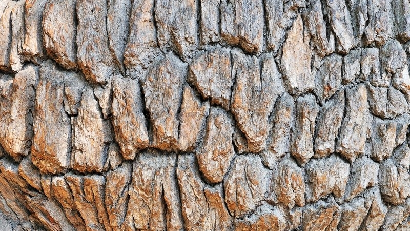 White Oak Bark - Used by native Americans to help treat oral infections and other dental issues like gingivitis and toothache. The bark contains antibacterial and antiseptic properties.