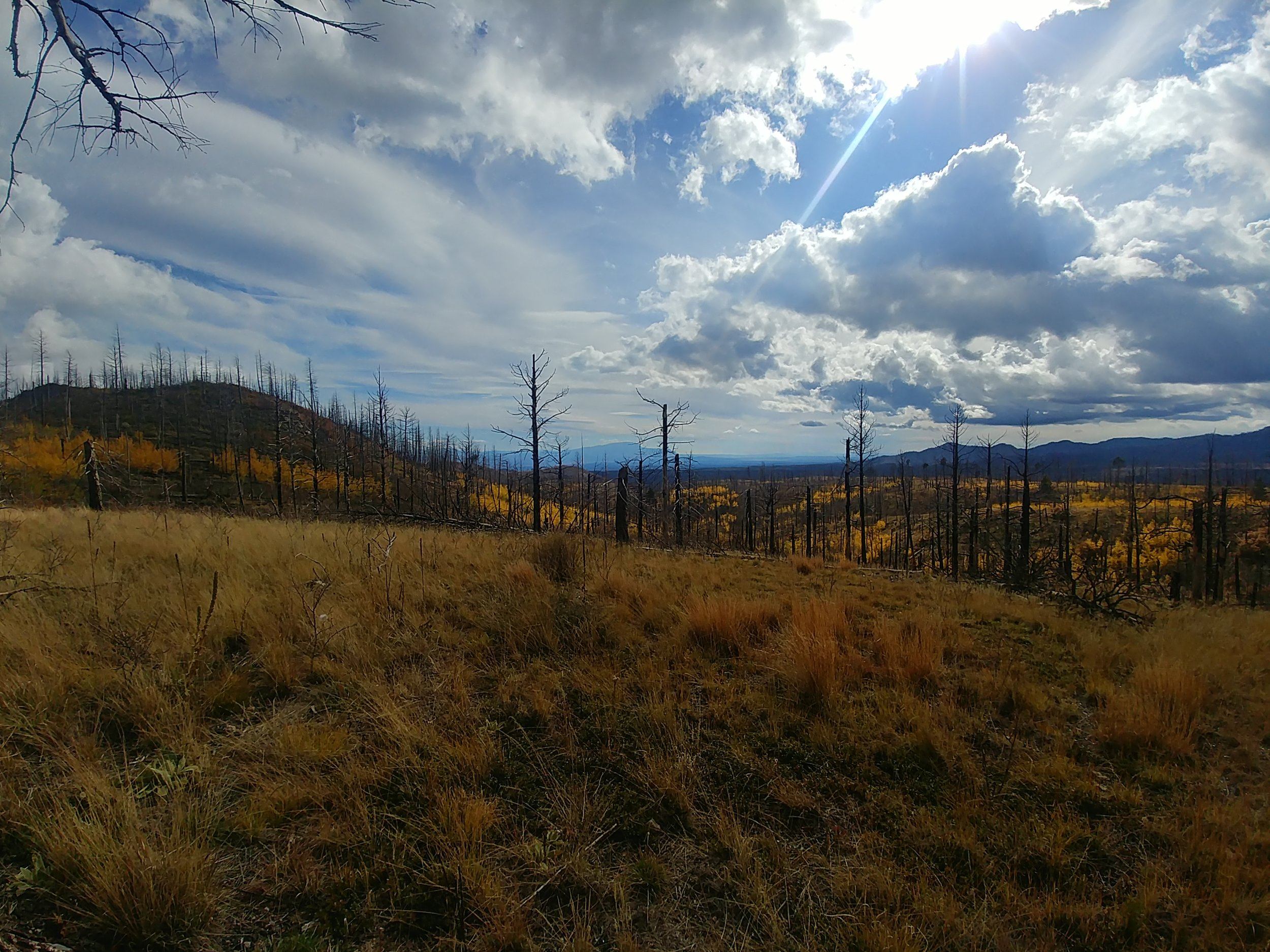 Some areas in the eastern Jemez Mountains have started to recover from the fires, others need may need some help. The EJLF project seeks to identify and address the areas that may need a jumpstart. Credit: Megan Heeres