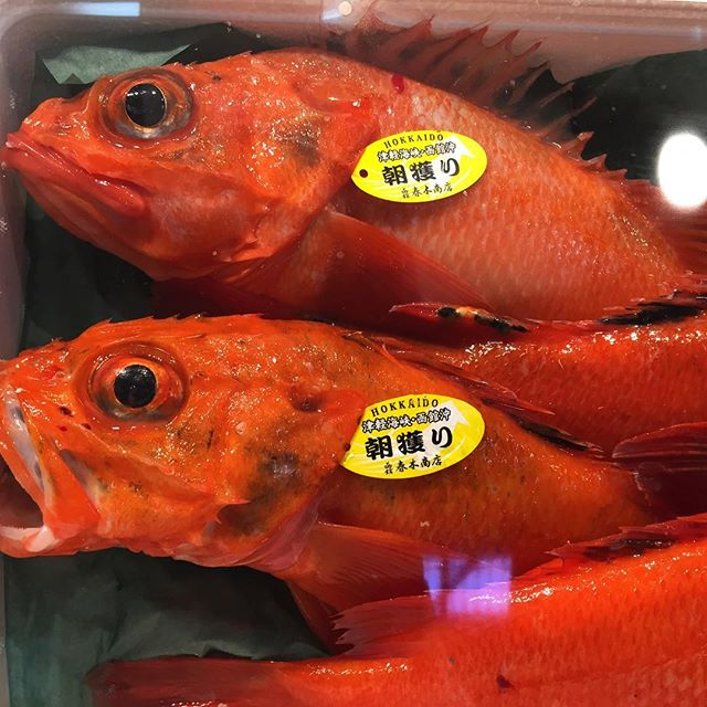Hokkaido Fish 🐠 🐟 🎣  #basehotelhakuba #skiing #freeskiing #japow #japanuary #ramen #sushi #backcountryskiing #hakuba #hakubavalley #powderskiing #yuki #snow #hakuba47 #shinkansen #airbnb #jumbochocomonaka #dalbello #armadaskis #japan #nihonshu
