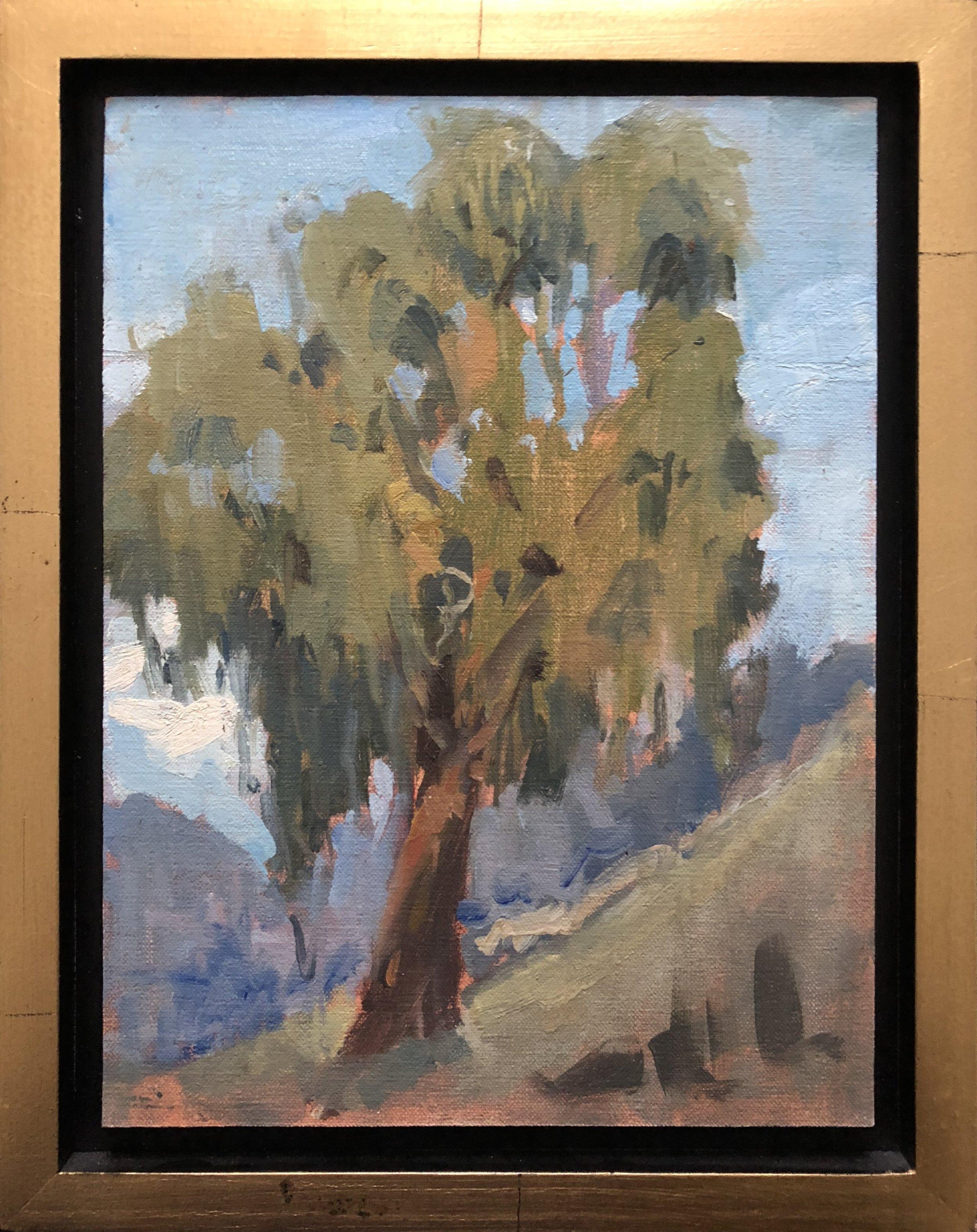 Eucaluptis Tree