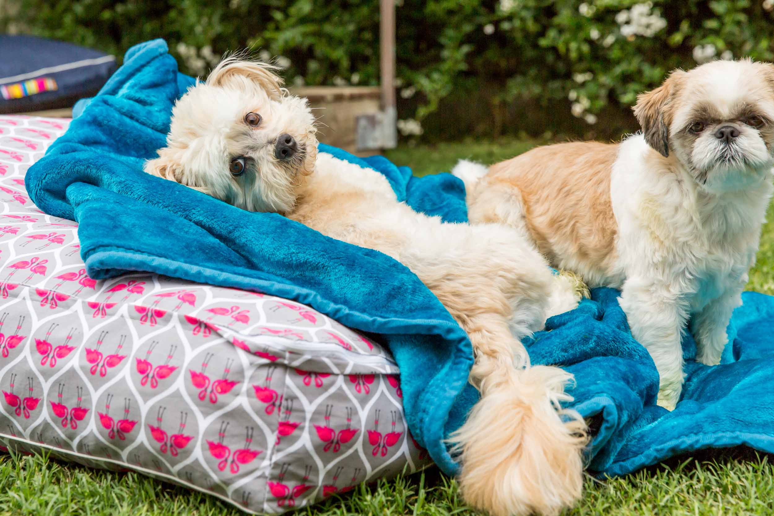 SErvices - Beds for Tails offer an extensive range of first class, boutique and personalised services to ensure your best friends stay with us is 100% worry free.