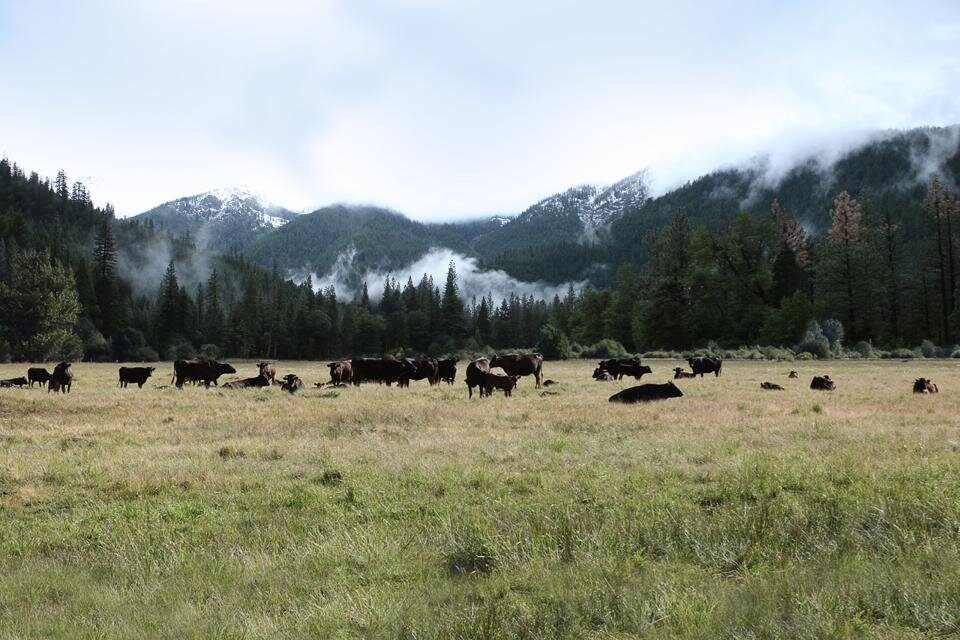 Aerial imaging technology tracks pasture quality, helping to restore grassland on the ranch.  PHOTO: GENESEE VALLEY RANCH
