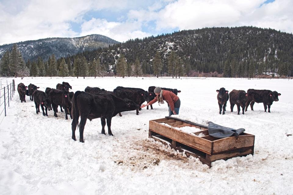 Ranch Manager Michele Haskins connecting with Wagyu cows in the winter.  PHOTO: GENESEE VALLEY RANCH/ DAVID LELAND HYDE