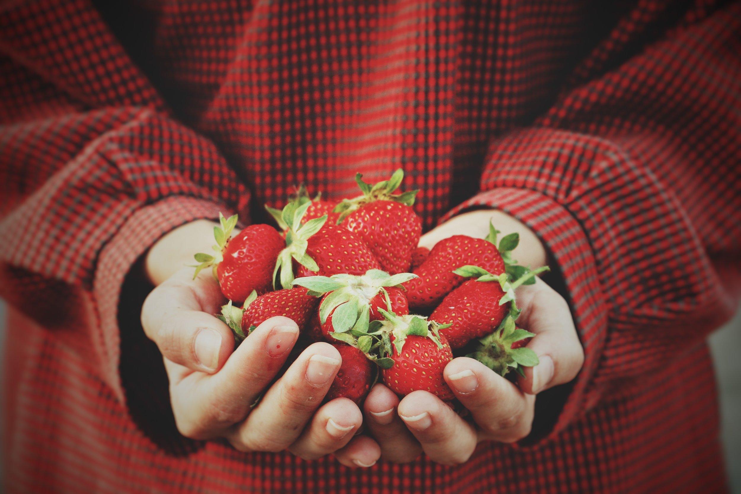 uwm.organic.budget.hand-fruit-finger-food-red-produce-1411932-pxhere.com