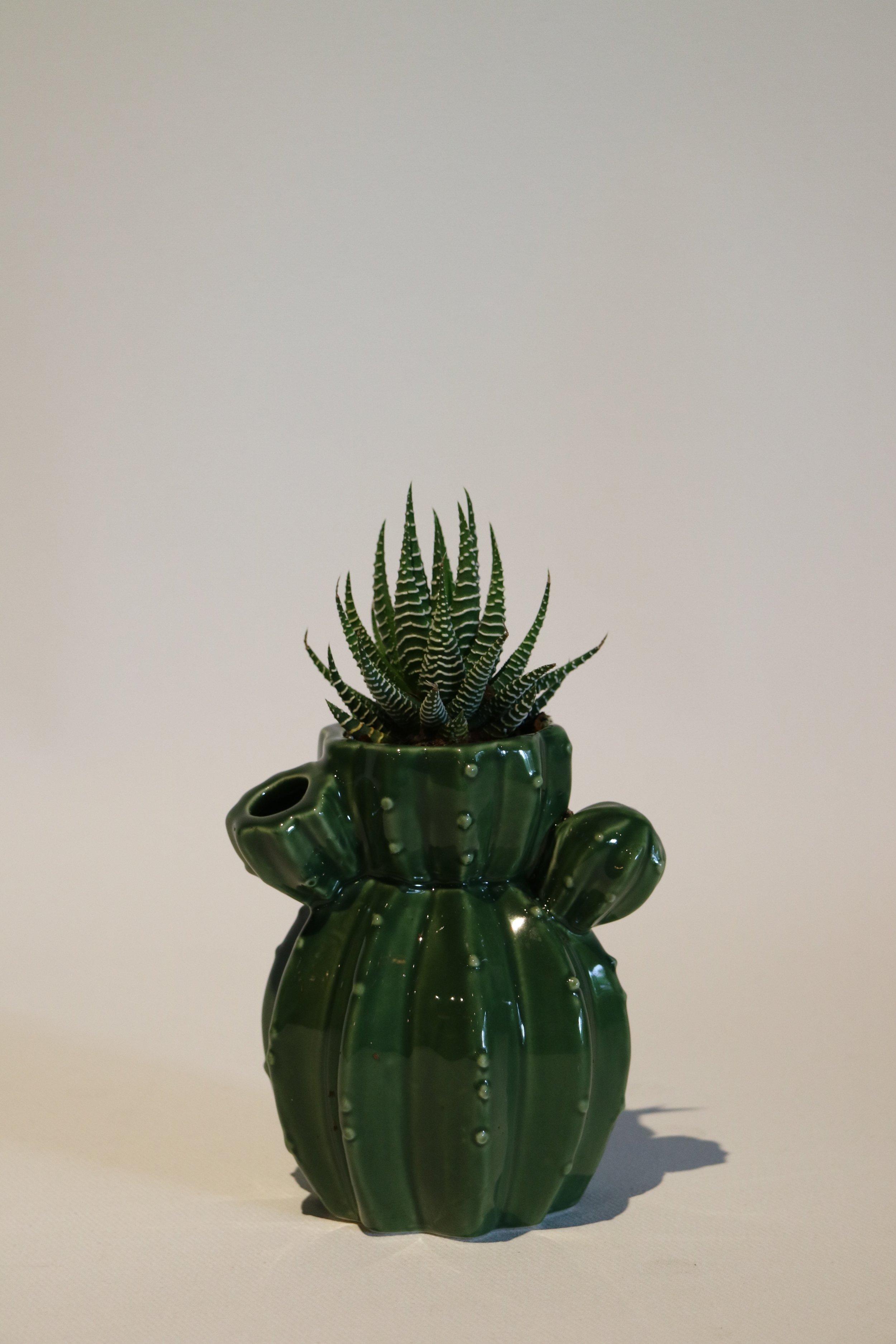 SML Cactus Pot Succulents
