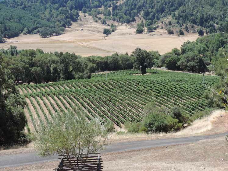 Weir-Vineyard.jpg