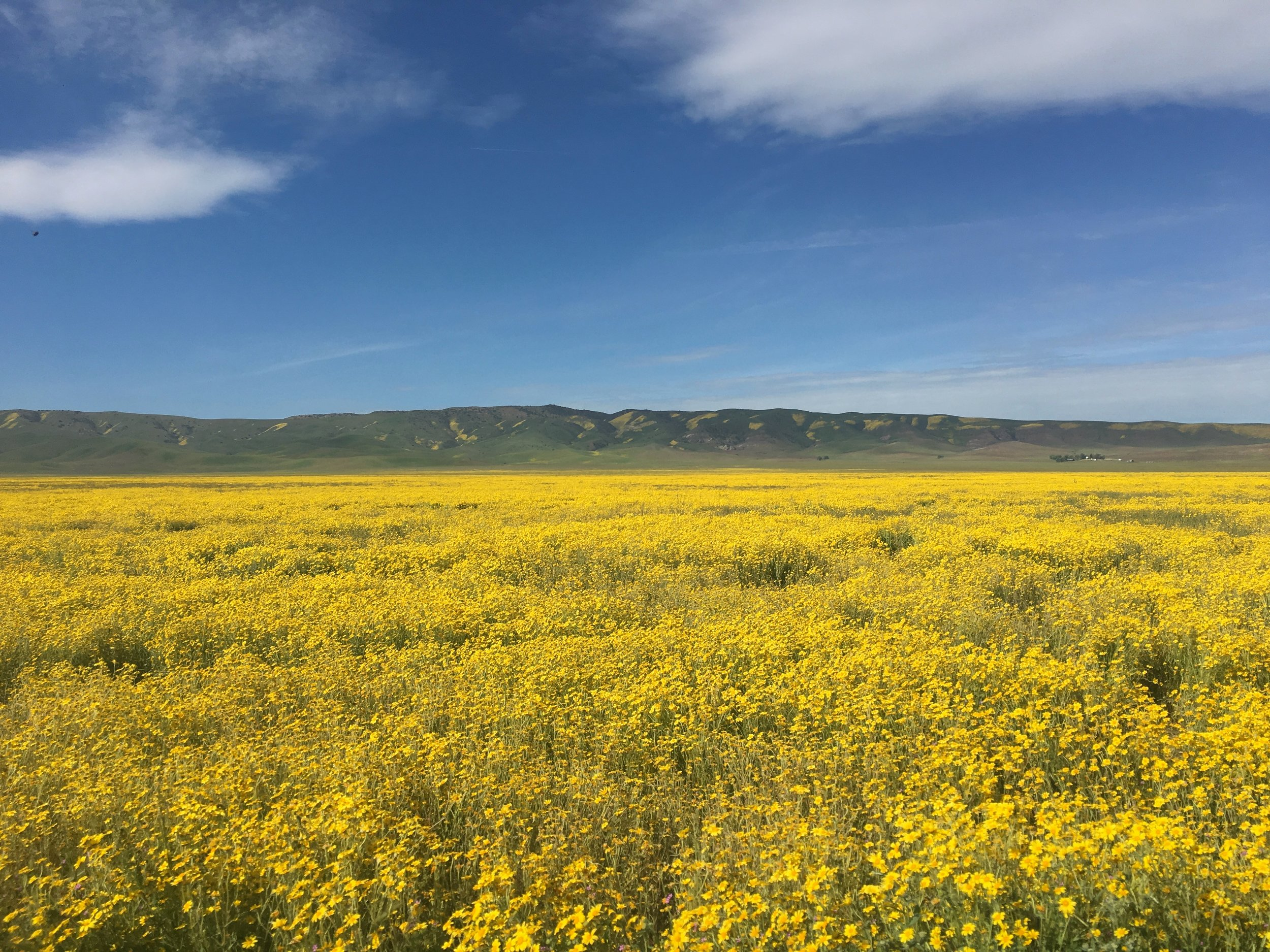 One week before the call, I saw the most amazing flower display at Carrizo Plain National Monument