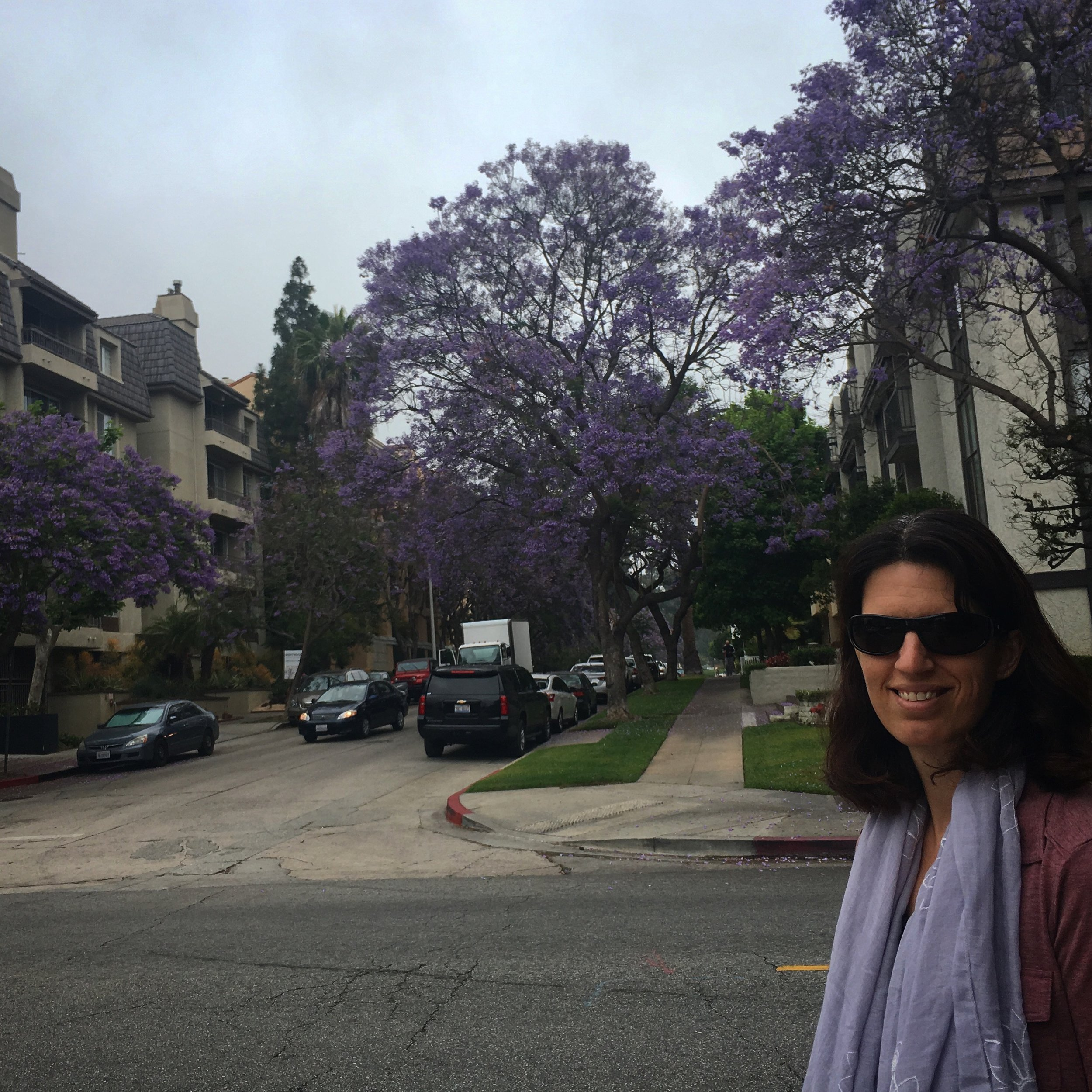 First walk and the Jacaranda trees in bloom!