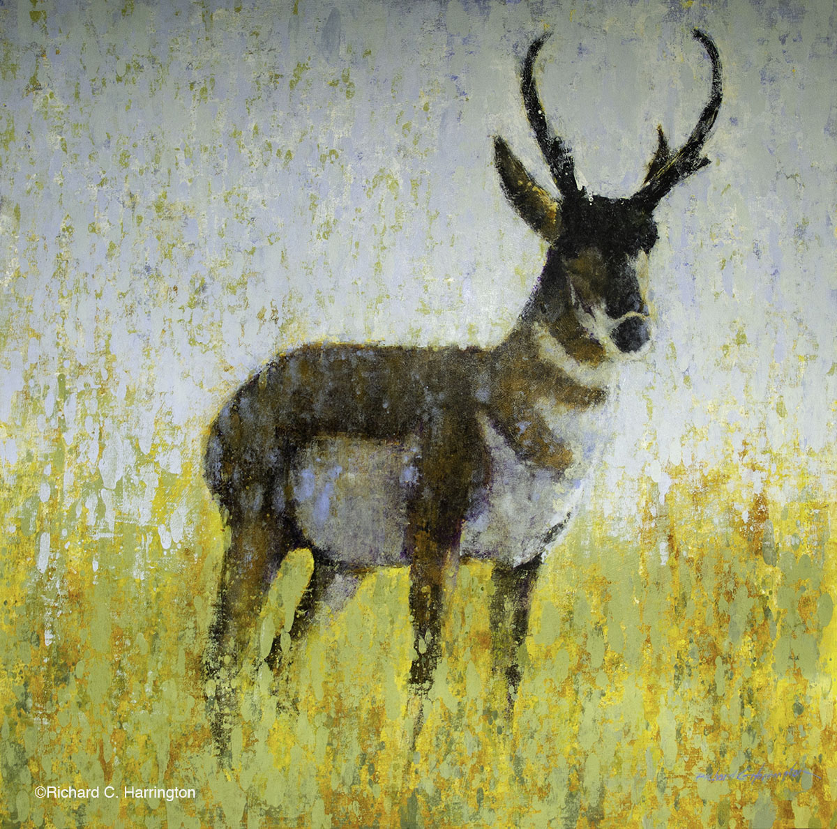 Pronghorn, 48 x 48, acrylic on panel. Available through artist.