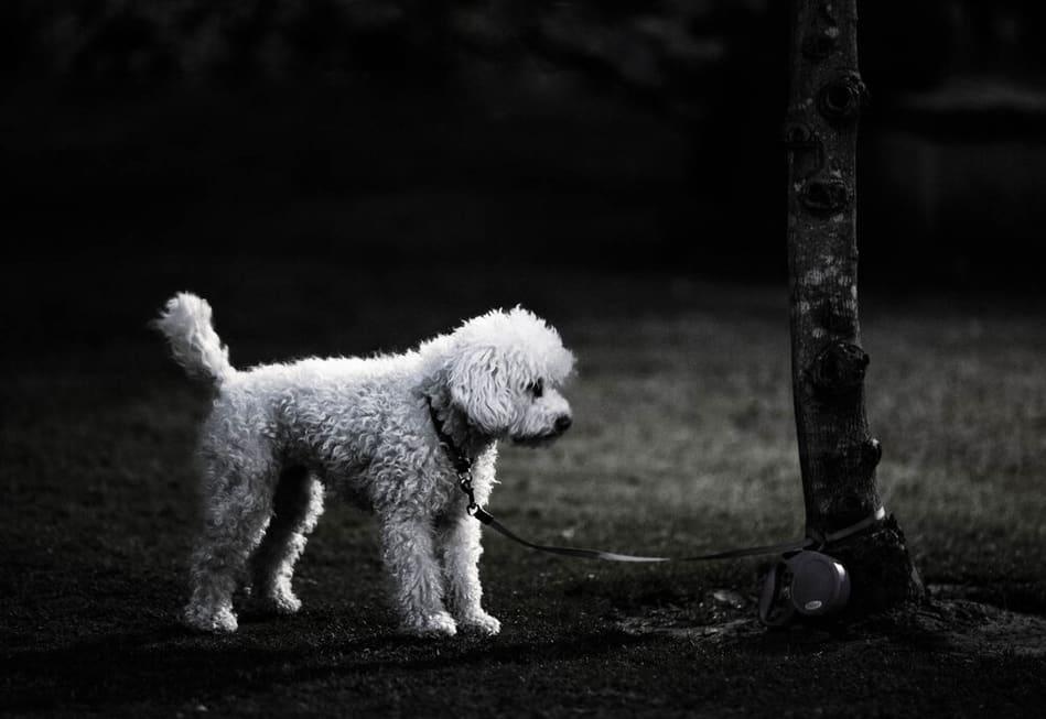 צילום רחוב ובו כלב בודד