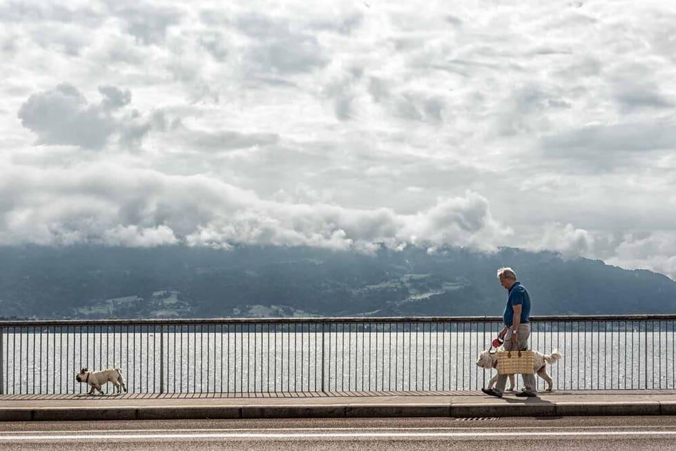 צילום רחוב שבו ניתן לראות גבר עם כלבים