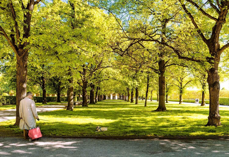 צילום רחוב באמצע פארק